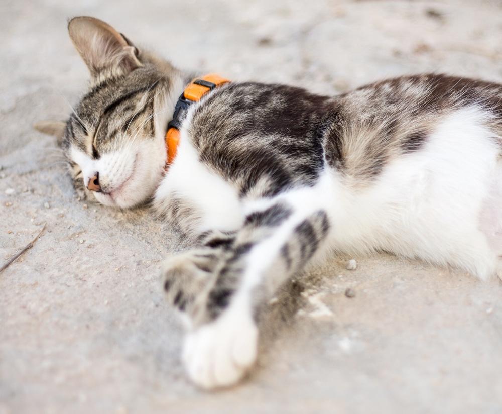 śpiący słodki kot
